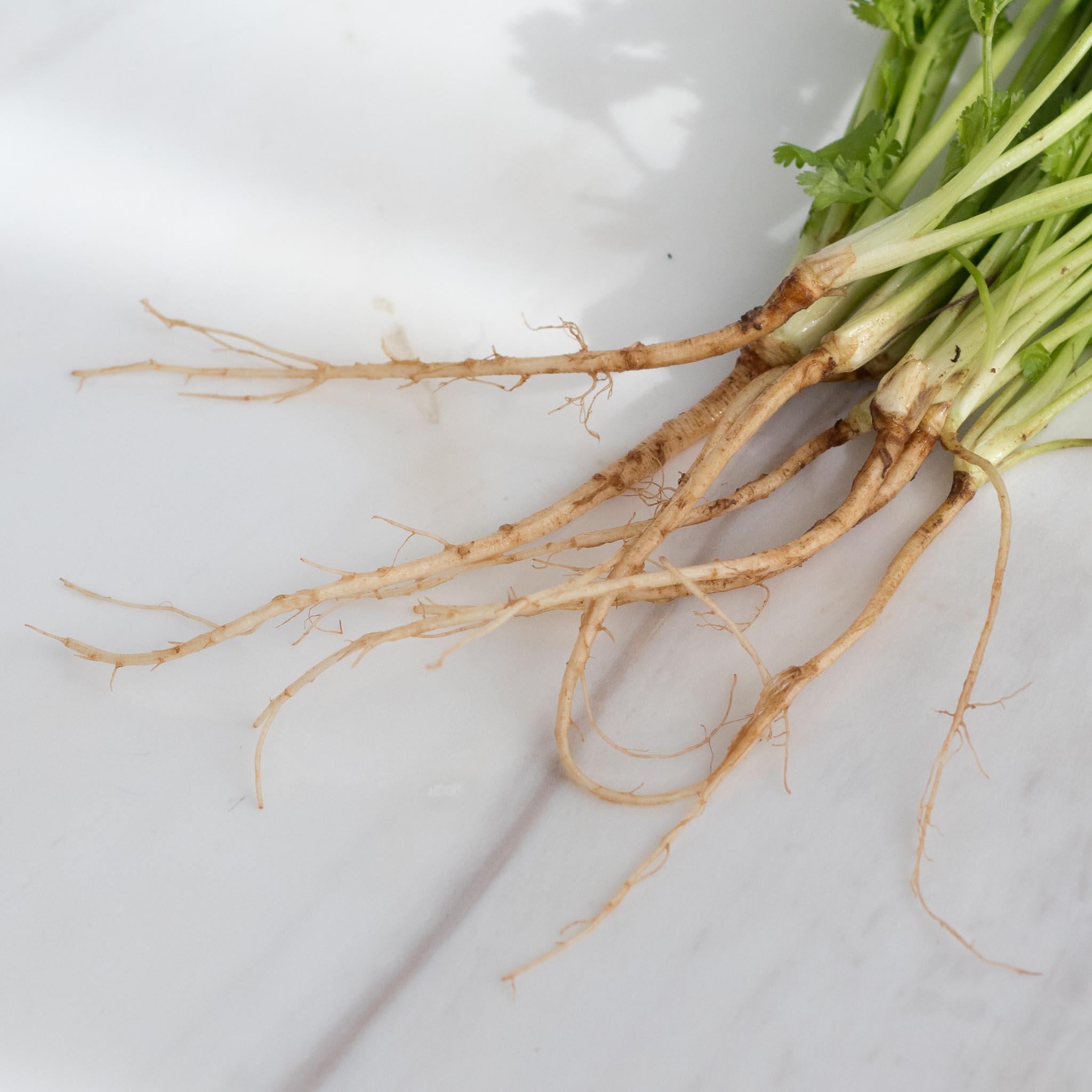 Coriander Root (รากผักชี)
