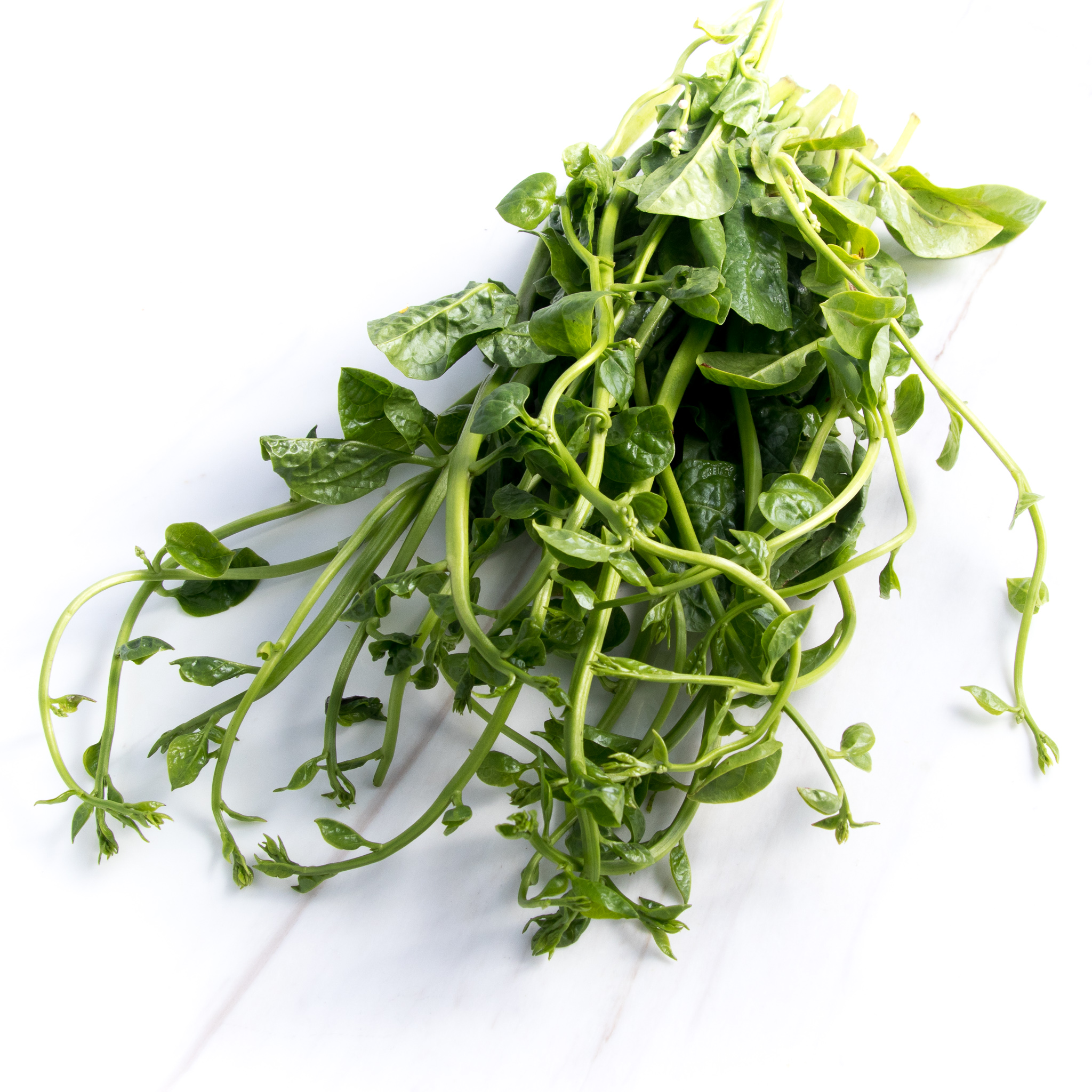 Ceylon spinach (ผักปลัง)